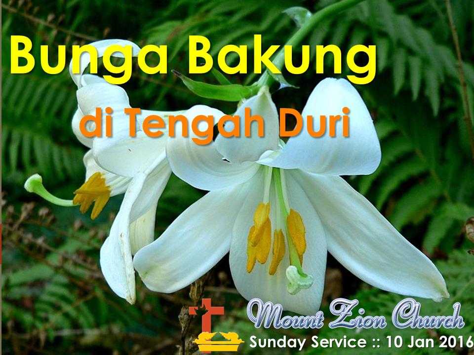 Bunga Bakung Di Tengah Duri Kidung Agung 2 1 2 Mount Zion Church